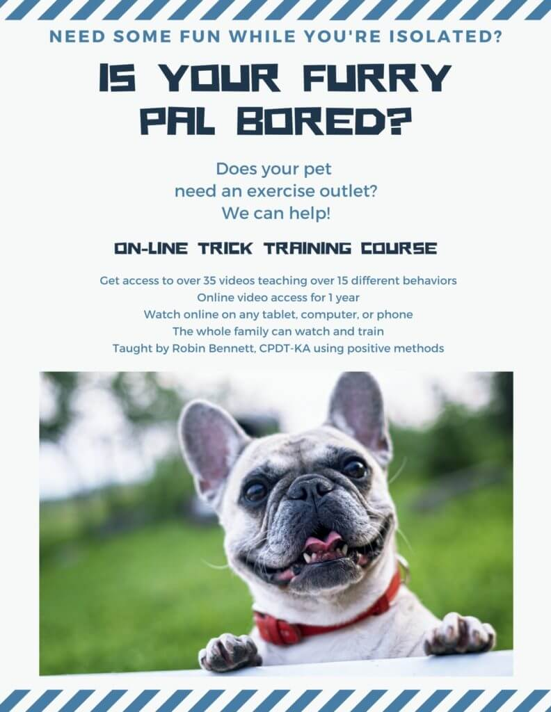 online dog trick training course